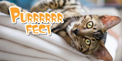 Cat Purring – How, When & Why do they do it?