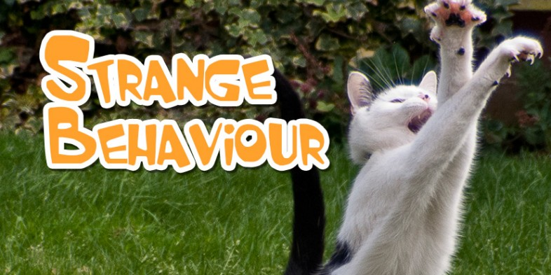 Strange Cat Behaviour – Our Top 6