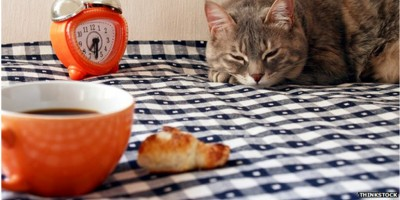 """New – """"Cat Cafe"""" Now Open"""