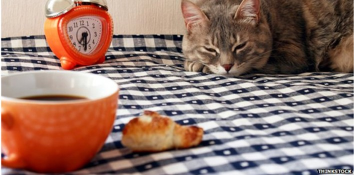 "New – ""Cat Cafe"" Now Open"